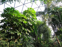 Looking up at the conservatory ceiling, in the forest aviary.