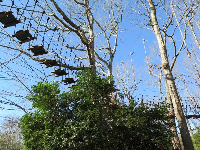 Ropes course, open in summer.