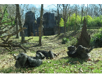 Chimpanzees hanging out in the grass.