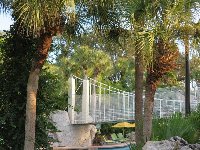 The bridge over the pool, and palm trees.