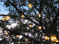 Lanterns above you...magic!