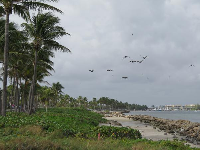 Birds at the little lagoon area between Dubois Lagoon and Jupiter Beach.