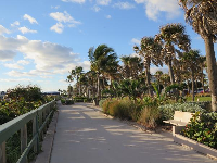Walkway lined with palms.