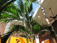 Stores and palms.