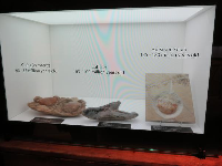 Fossils, displayed beautifully.