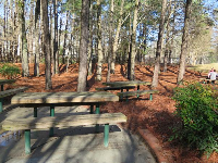 Picnic tables in the forest.