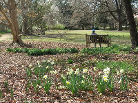 Sitting on a bench, with daffodils behind.