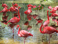 Amazing colors of the flamingos.
