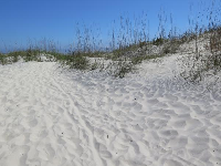 White sand on the dunes.