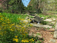 Stream and flowers.