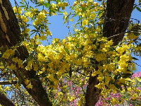 Yellow flowers on the arbor!