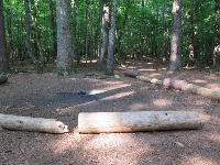 Natural log play area in the forest.