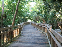Boardwalk in the jungly part.