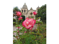 Rose, with mission in background.