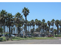 The parking lot has so many palms!