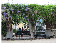 Young women on a bench swing in the median of the main strip, with wisteria blossoms above.