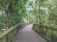 Oakland Nature Preserve, a wooden boardwalk that leads 900m to a gazebo on Lake Apopka.