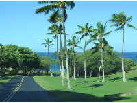 Views of palms and bluest ocean, on the hotel road.