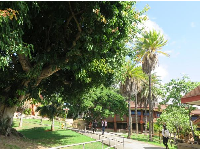 Palm trees on the KCC campus.