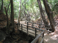 Bridge on the Nojoqui Falls walk.