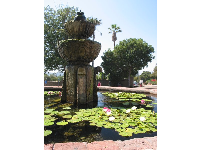 Fountain with lilies in front of the mission.