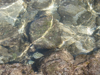 Perfectly clearly you can see little fish dart around right before your eyes in the tidepools.