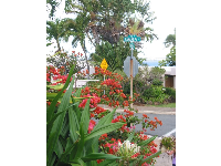 Hanapepe Place and the red bougainvillea, Traveler's Trees, and other tropical plants.