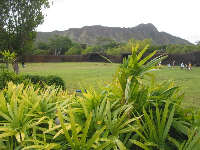 Healthy, colorful plants and Diamond Head in the distance.
