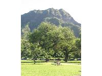 The volcanic crater, Diamond Head, stands tall above Kapiolani Park.