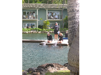 Dolphin Show at Kahala Resort- a free attraction!
