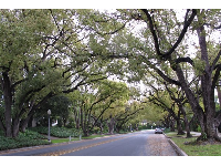Amazing canopy of trees- a common sight in San Marina and Pasadena.