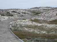 Curvy wooden boardwalk amongst the dunes.
