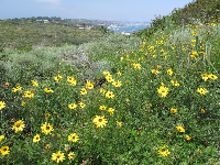 San Diego is filled with wildflowers!