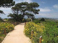 The pathway to the lighthouse, surrounded by flowers.