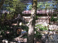 Tiger enclosure.