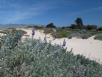 Flowers in the dunes.