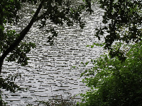 View of the lake, as seen from the path that does not require an entrance fee.
