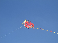 Flying our new ladybug kite on a sunny day at Harbor Cove Beach.