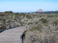 Round the bend and Morro Rock appears before your eyes!
