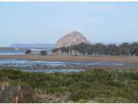 Close-up of Morro Rock, as seen from the Elfin Forest boardwalk.