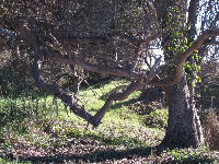 Sun-dappled forest on the bluffs behind Jelly Bowl Beach.