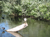 A heron hanging out where the fish action used to be.