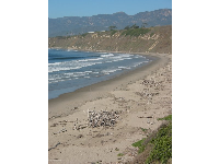 The curve of Rincon Beach.
