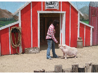 Animal show featuring pigs, cows, and chickens.