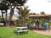 Monterey cypress tree and grass shack condiments bar.