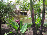 Tropical pond lush with plants.