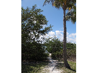 Path to the little private beach on the intracoastal waterway.