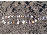 String of shells in the grey sand.
