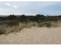 The view behind the dunes.