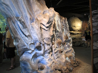 Imitation rock wall in the museum.